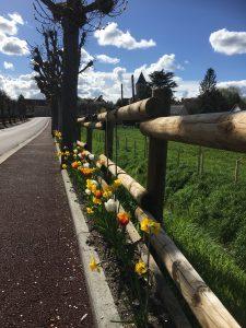 Fleurissement rue du pont